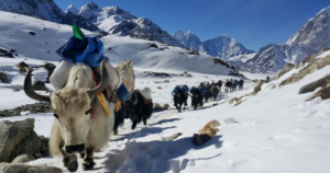 Mount Everest Base Camp Trek With Yaks
