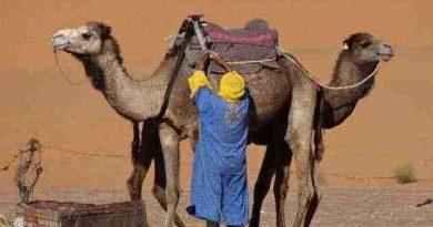 Desert Morocco Camel Trekking Trip