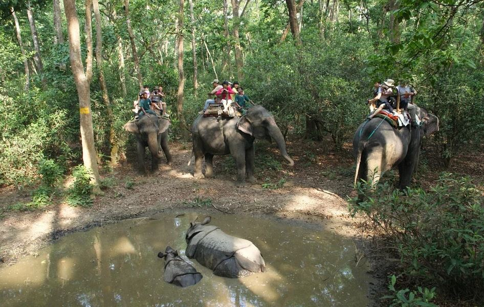 People Riding Elephant in Chitwan National Park