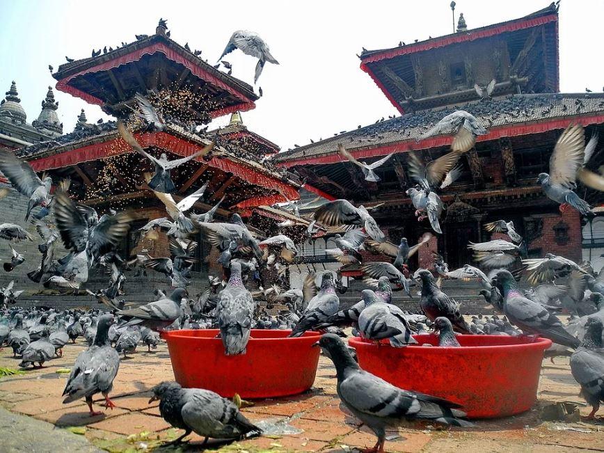 Birds in Kathmandu Nepal